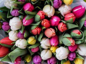 Ostern Tulpen